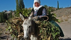 Cappadocian woman and her donkey